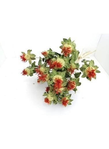 Kuru Çiçek Deposu Aspir Çiçeği Kuru Çiçek Demeti Yeşil